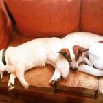 Проживание и присмотр для собачек.