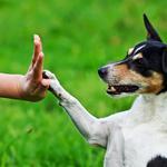 Дрессировка собак. Индивидуальные занятия в Минске